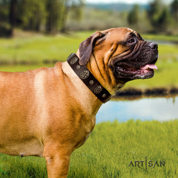 Bullmastiff daily walking genuine leather collar with decorations for your four-legged friend