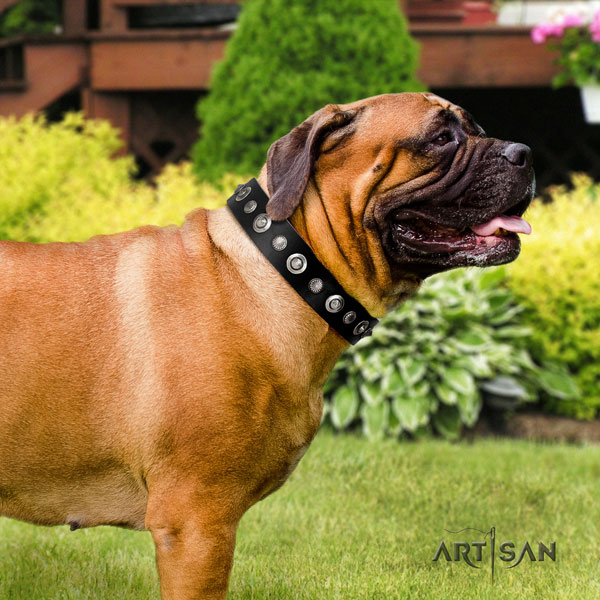 Bullmastiff full grain natural leather dog collar with embellishments for your stylish canine