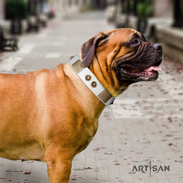Bullmastiff comfy wearing natural leather collar with studs for your four-legged friend