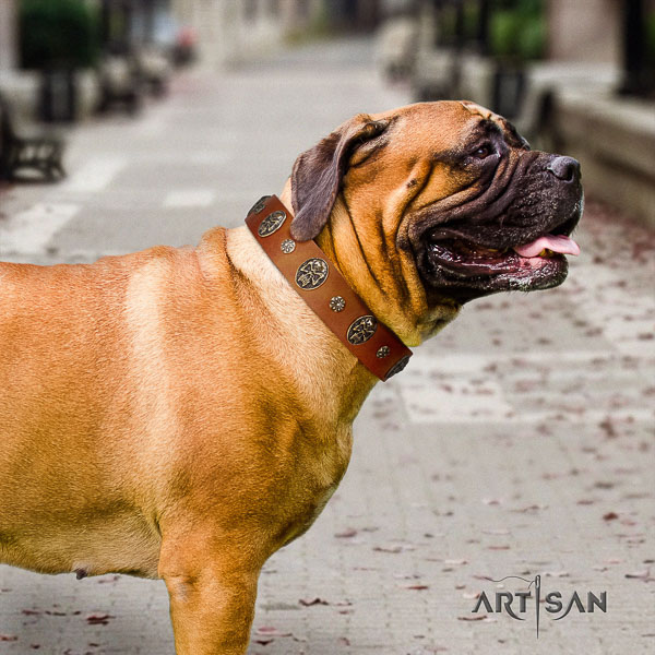 Bullmastiff walking full grain genuine leather collar with decorations for your doggie
