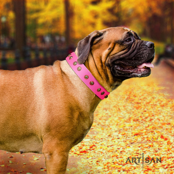 Bullmastiff adorned leather dog collar for your lovely pet