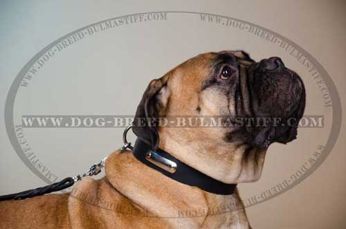 Stylish Leather Bullastiff Breed Collar equipped with id tag
