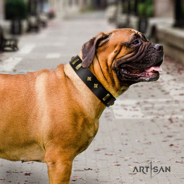 Bullmastiff stylish walking full grain leather collar with embellishments for your dog