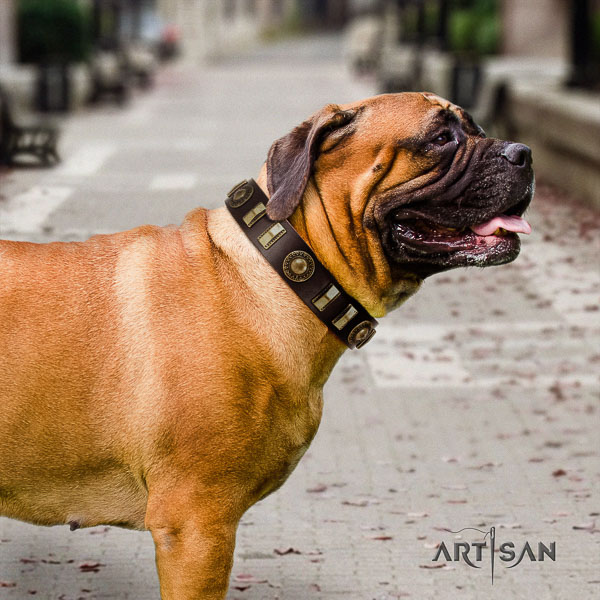 Bullmastiff everyday use natural leather collar with adornments for your dog