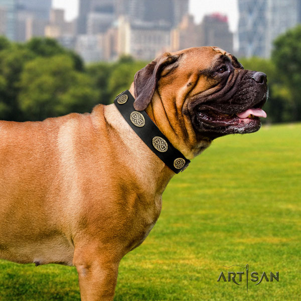 Bullmastiff studded genuine leather dog collar for your beautiful canine