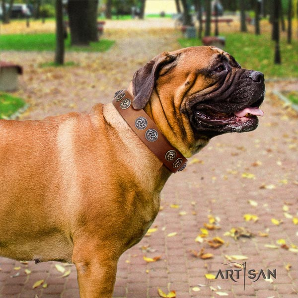 Bullmastiff awesome genuine leather collar with studs for your canine
