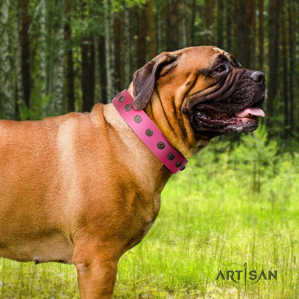 Bullmastiff unusual natural genuine leather collar with adornments for your four-legged friend