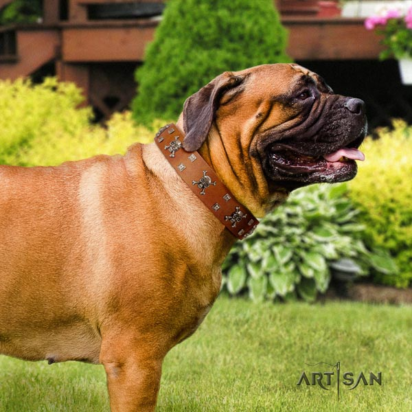 Bullmastiff unusual natural genuine leather collar with embellishments for your four-legged friend