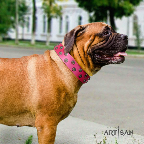 Bullmastiff stunning full grain natural leather collar with decorations for your doggie