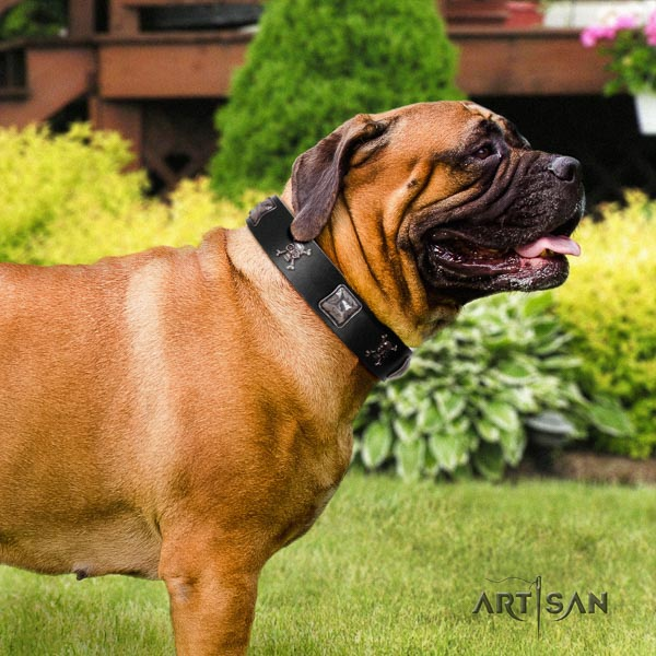 Bullmastiff stylish full grain natural leather collar with adornments for your doggie