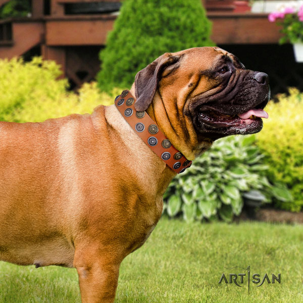 Bullmastiff embellished full grain genuine leather dog collar for your stylish four-legged friend