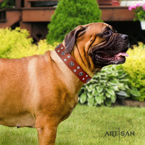 Bullmastiff embellished full grain natural leather dog collar for your stylish dog