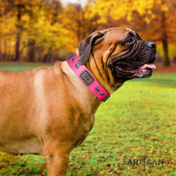 Bullmastiff studded full grain natural leather dog collar for your handsome doggie