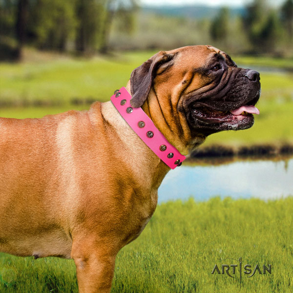 Bullmastiff embellished full grain leather dog collar for your attractive dog