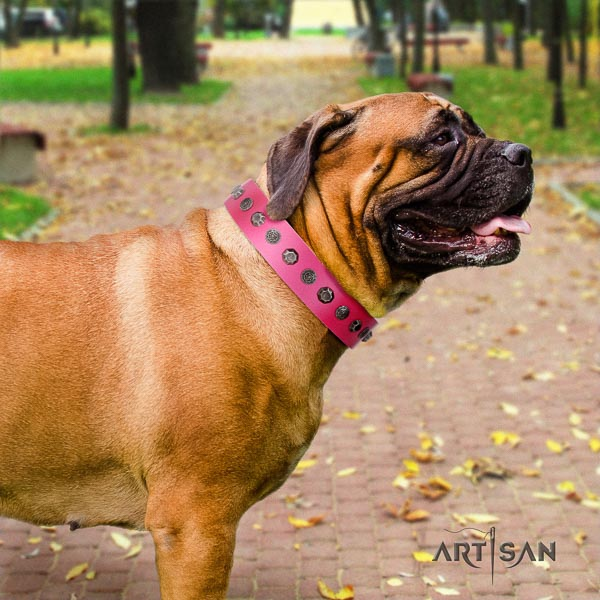 Bullmastiff easy wearing genuine leather collar with studs for your four-legged friend