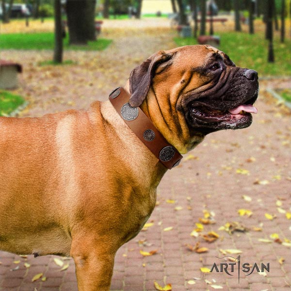 Bullmastiff comfortable leather collar with adornments for your four-legged friend
