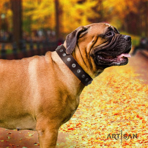 Bullmastiff stylish leather collar with adornments for your canine