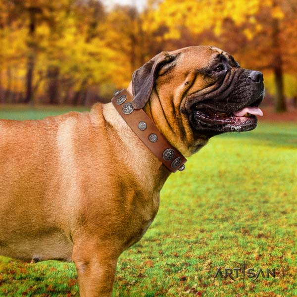 Bullmastiff adjustable leather collar with adornments for your dog