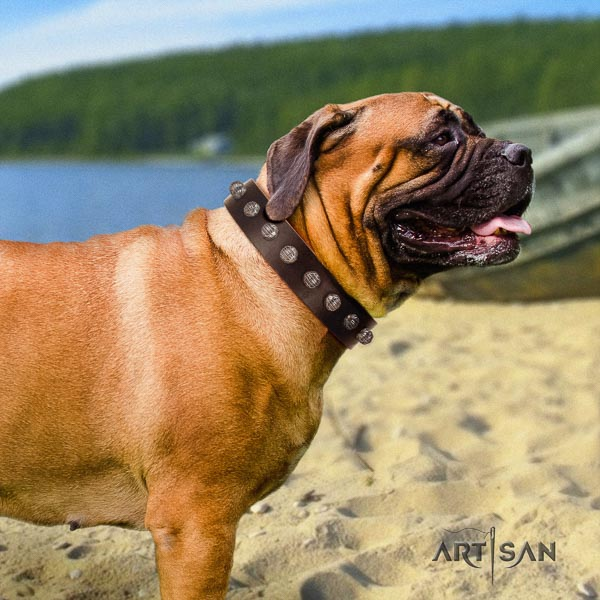 Bullmastiff amazing full grain natural leather collar with adornments for your canine