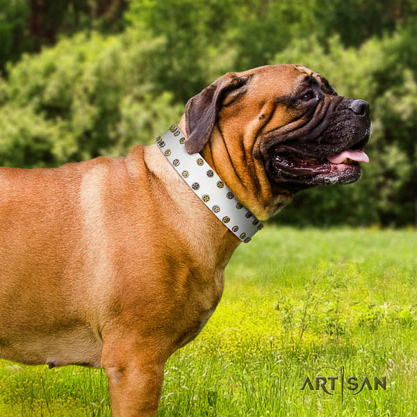 Bullmastiff everyday use genuine leather collar with studs for your four-legged friend