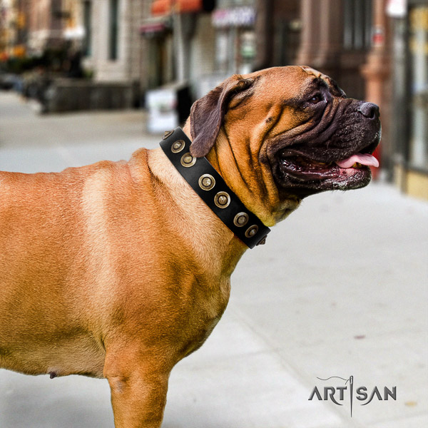 Bullmastiff everyday walking full grain natural leather collar with studs for your dog