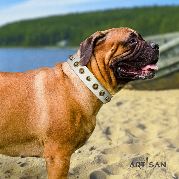 Bullmastiff stylish walking leather collar with adornments for your four-legged friend
