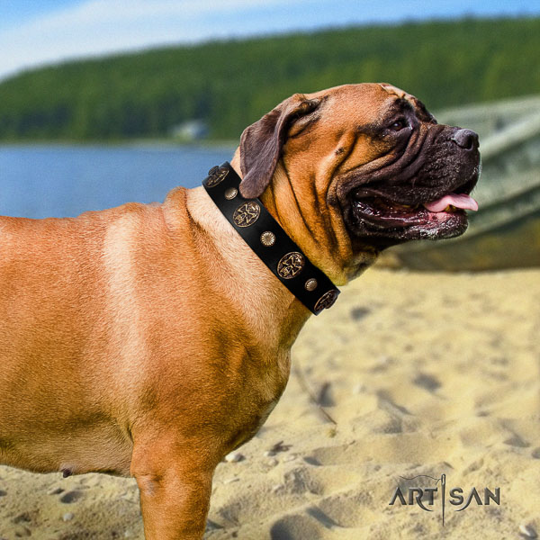 Bullmastiff fancy walking genuine leather collar with studs for your dog