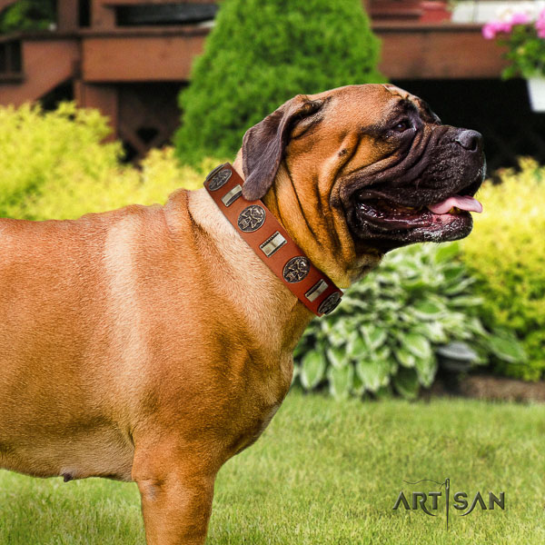 Bullmastiff fancy walking full grain natural leather collar with adornments for your four-legged friend
