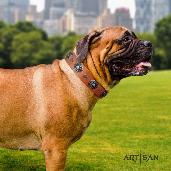 Bullmastiff embellished natural genuine leather dog collar for your stylish pet