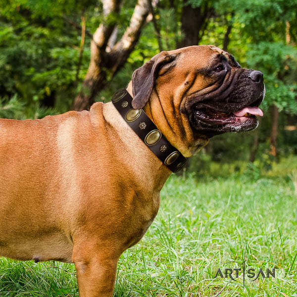 Bullmastiff stylish walking full grain natural leather collar with studs for your pet