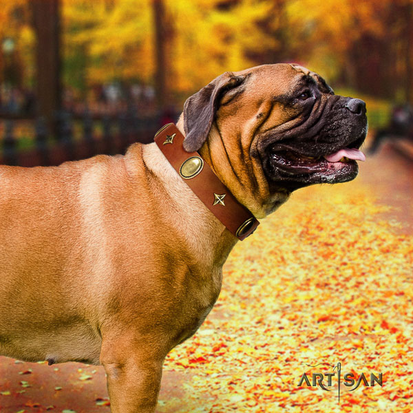 Bullmastiff daily walking full grain genuine leather collar with adornments for your dog