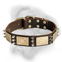 Bullmastiff quality leather dog collar with decorations