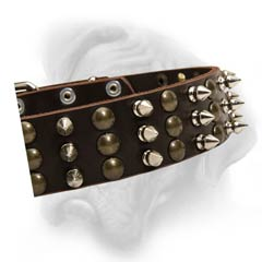 Bullmastiff collar with colomns of spikes and studs