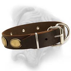 Bullmastiff stylish collar