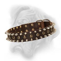 Bullmastiff decorated collar