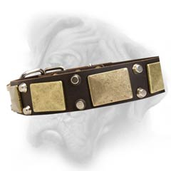Bullmastiff dog collar with rivets