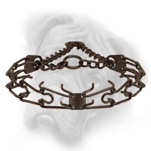 Bullmastiff prong collar with a front plate