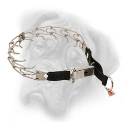 Bullmastiff pinch collar with click lock buckle