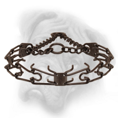 Prong collar of black antique copper plated steel for  Bullmastiff