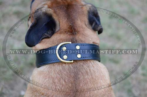 Leather Bullmastiff collar with D-ring for a leash