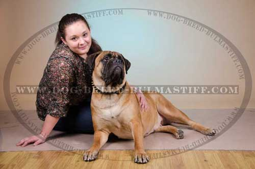 Leather Bullmastiff Breed Collar with padding