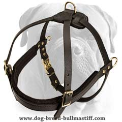 Quality leather harness