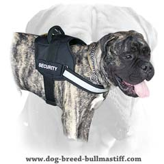 Bullmastiff breed harness with id patches on Velcro