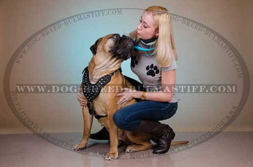 Hand-Decorated Leather Dog Harness specially for your Bullmastiff