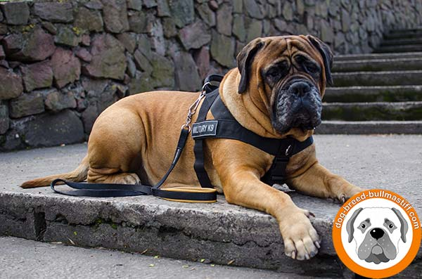 Reliable  Nylon Bullmastiff Harness with ID Patches