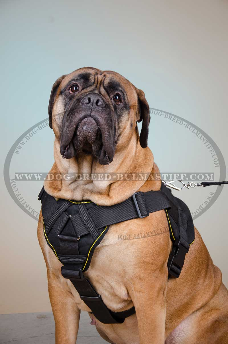 Nylon Easy Walking And Training Dog Harness For