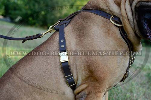 Easy Walking Studded Dog Harness
