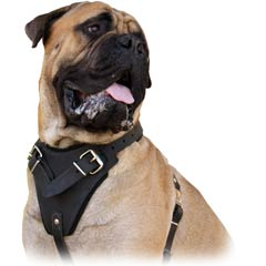 Wide chest plate harness