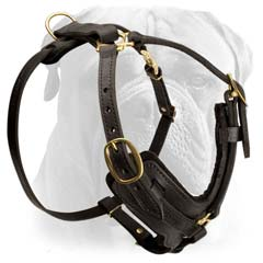 Bullmastiff dog harness with Brass fittings