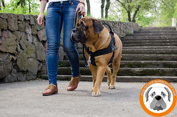 Functional  Nylon Bullmastiff Harness with Easy Grab Handle